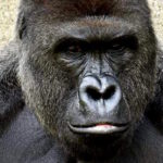 Killing a Gorilla and How Leaders Make Difficult Decisions